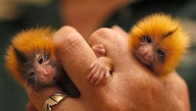 http://2.bp.blogspot.com/_mmBw3uzPnJI/TQjfsHmTHfI/AAAAAAAB0pc/IGMiDCQh_CY/s1600/finger_monkeys_01.jpg