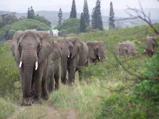 Wild elephants mourn the